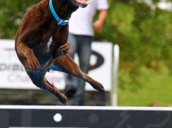 2017 Purina Pro Plan Incredible Dog Challenge