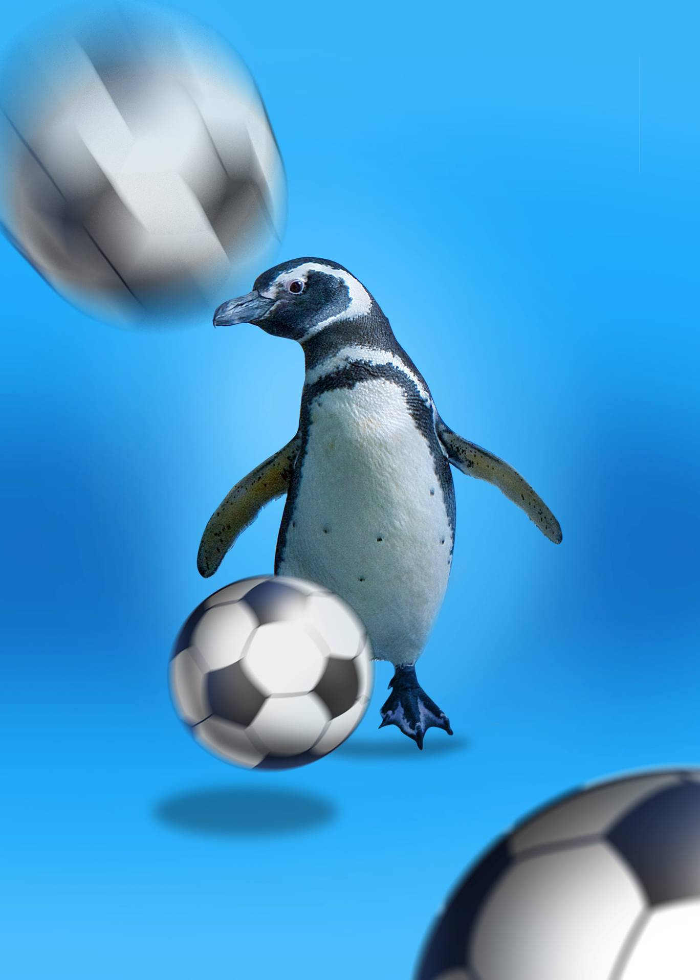 Penguins Playing Soccer | Aquarium of the Pacific
