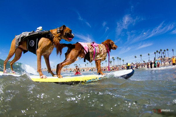 Surf Dogs Hanzo and Kalani