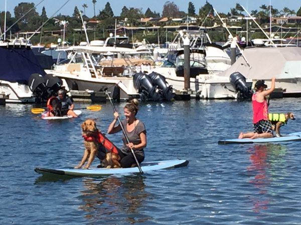 Learning to stand up paddleboard with your pup at Pirate Coast Paddle Co.