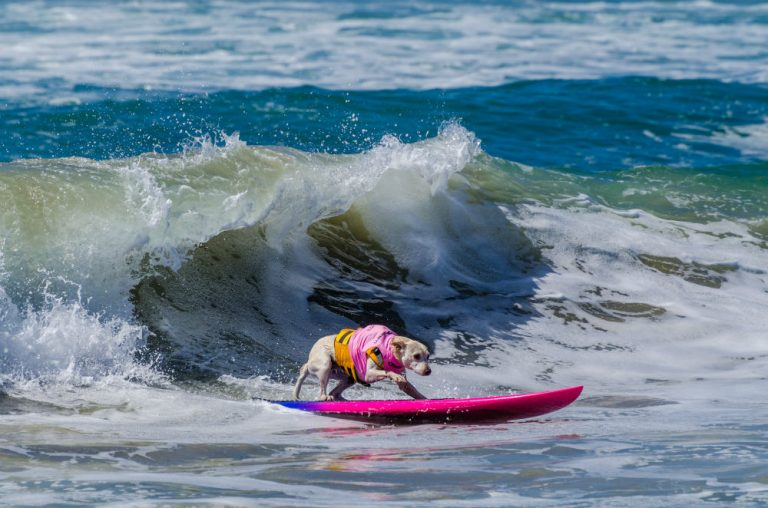 Surf City Surf Dog® Competition on September 23 sponsored by McKenna Subaru
