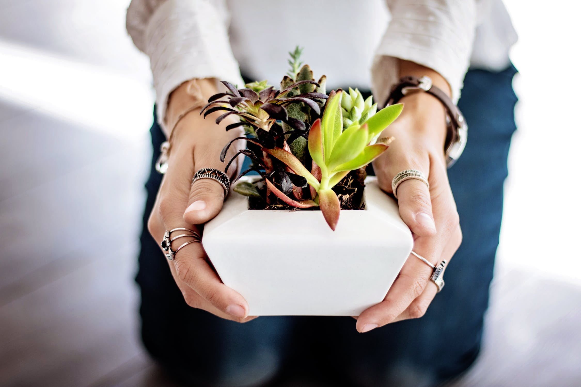 Free Succulent And Cacti Class At Armstrong Gardens Hb Surf