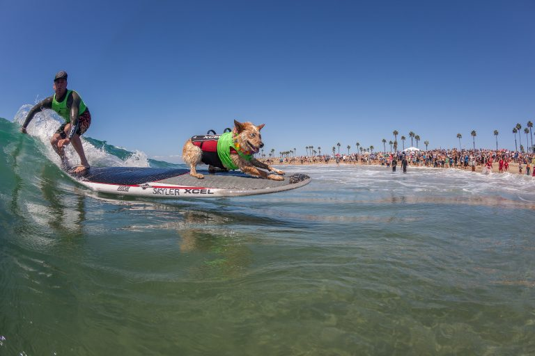 Surf City Surf Dog® to Bring World's Best Dog SurFURS to Huntington Beach