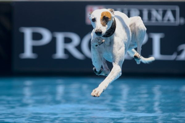 TOP CANINE ATHLETES RETURN TO HUNTINGTON BEACH FOR THE PURINA PRO PLAN INCREDIBLE DOG CHALLENGE