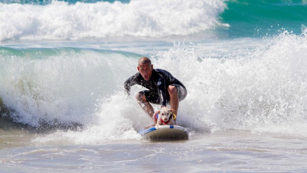 2017 Surf City Surf Dog®Presented by McKenna Subaru