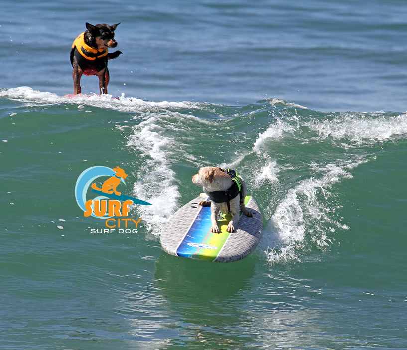 PAW-ABUNGA! Surf City Surf Dog Contest in Huntington Beach Dog Beach is a Hit!
