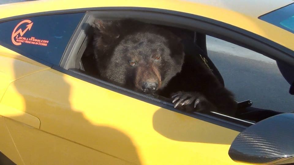Bear in a Lamborghini and Stick Baby Put News Spotlight on Huntington Beach