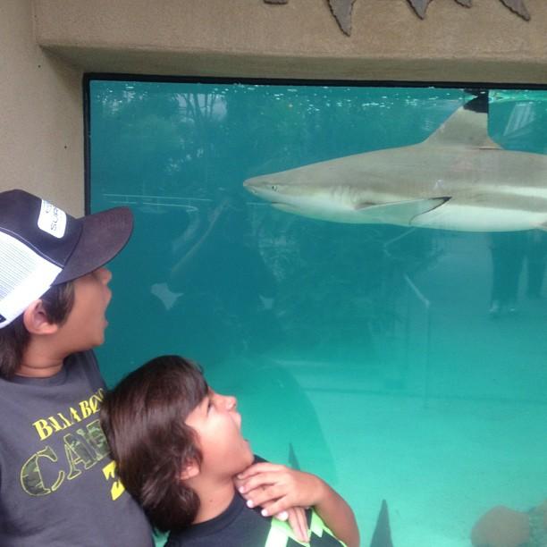 Sharknado | Surf City Family