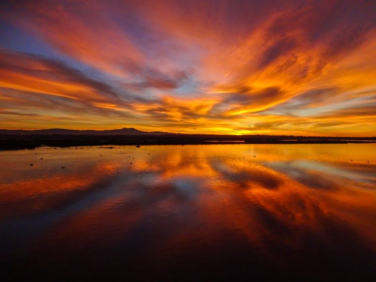 Photo Hobbyist Stephanie White Captures Striking Images from the Bolsa Chica Wetlands